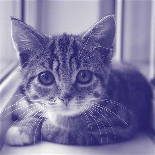 Portrait of Cat Winslet